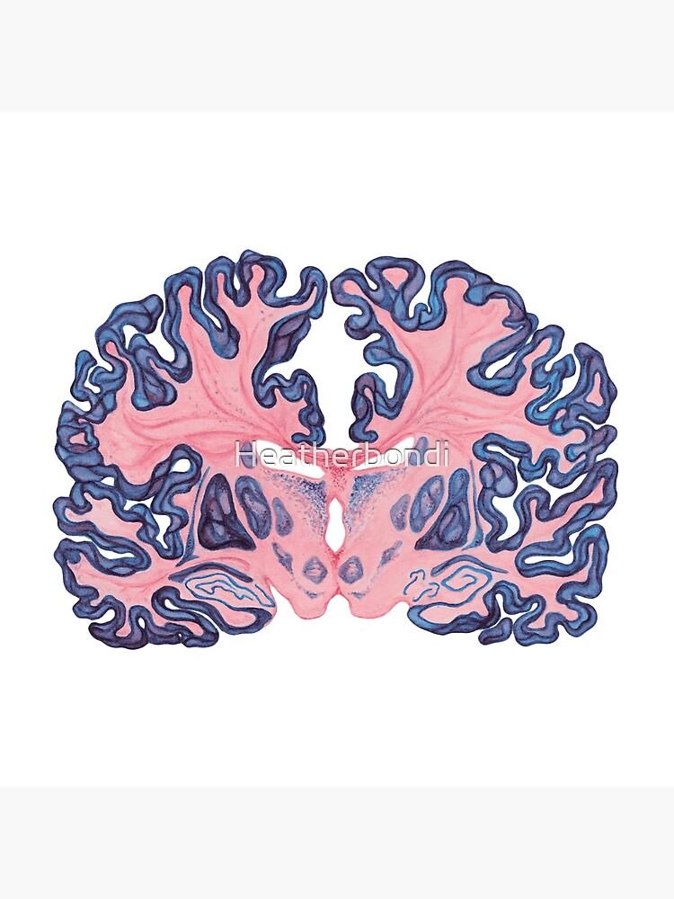 Gyri und Wirbel des menschlichen Gehirns von Heatherbondi