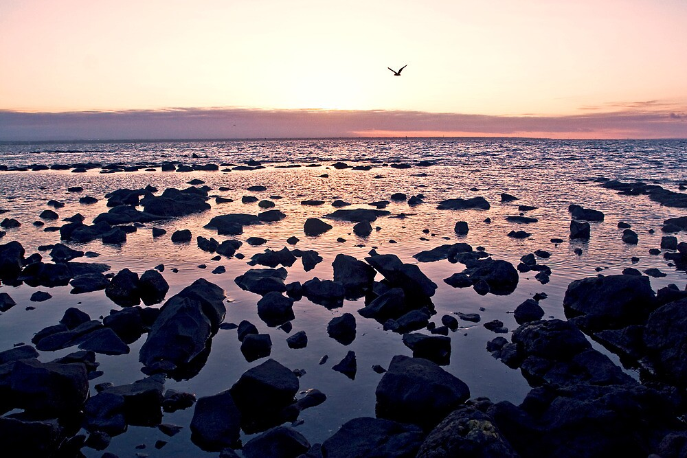 sunrise summertime williamstown by david de roach