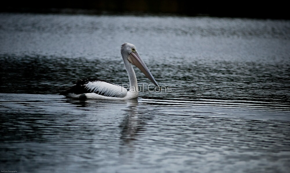 Staying Afloat by Paul Cons