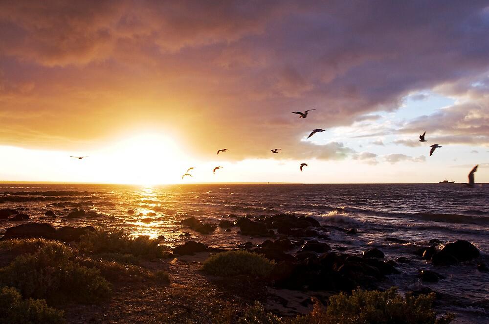 sunrise summer sea williamstown by david de roach