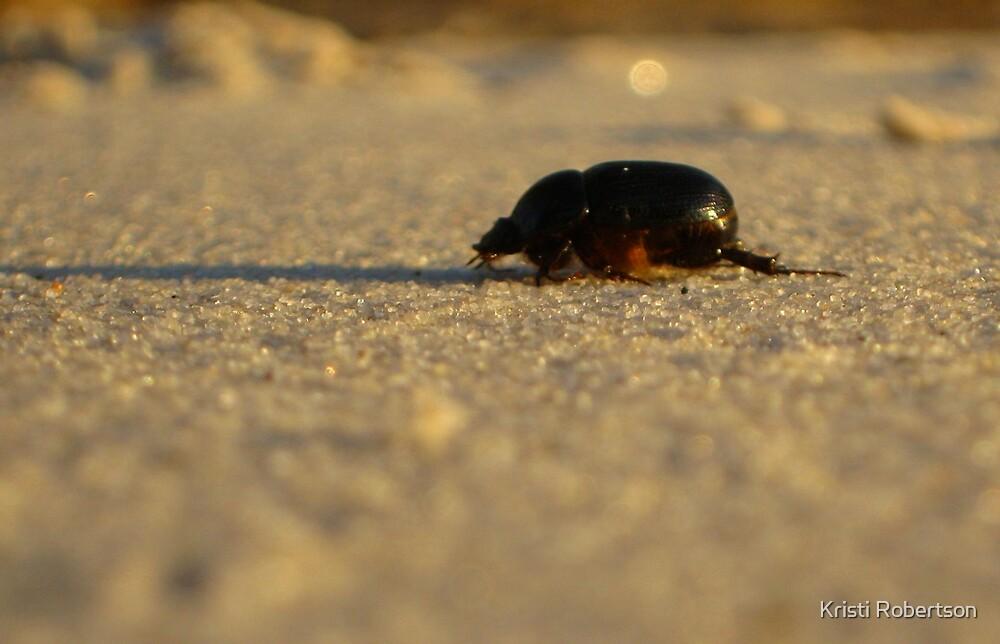 Beetle Walk by Kristi Robertson
