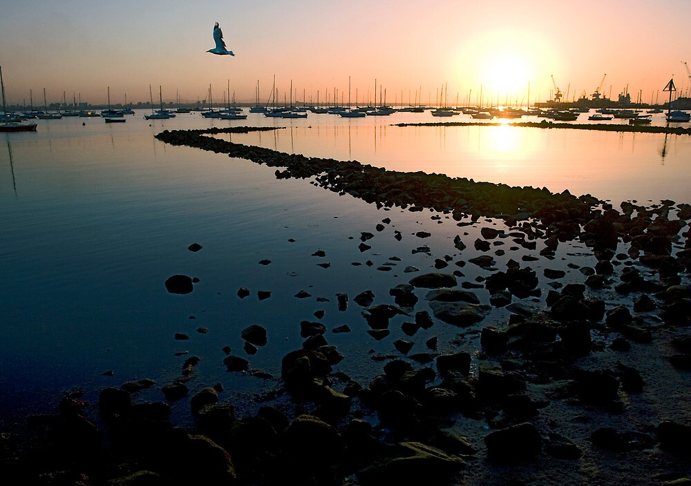 sunrise summer shoreline williamstown by david de roach