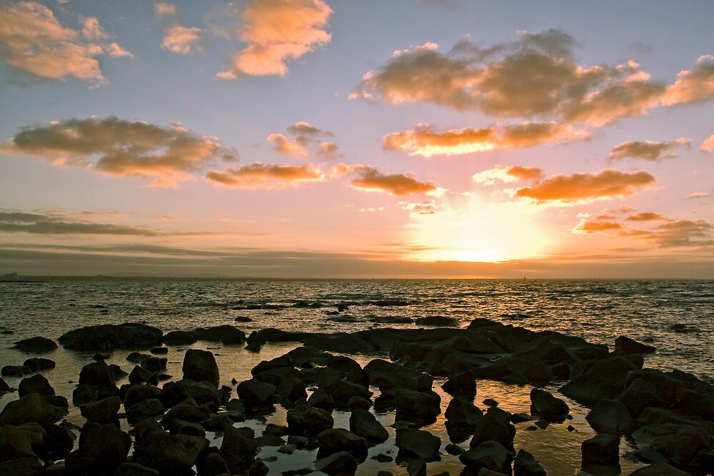 sunrise summer seascape williamstown by david de roach