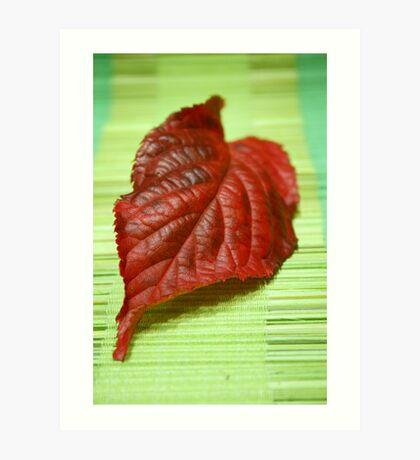 Blaze of colour Art Print