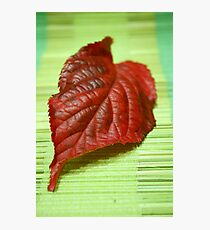 Blaze of colour Photographic Print