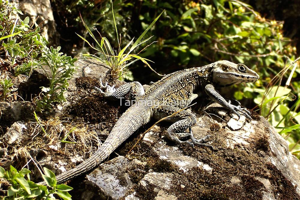 Lizard by Tanmay Kale