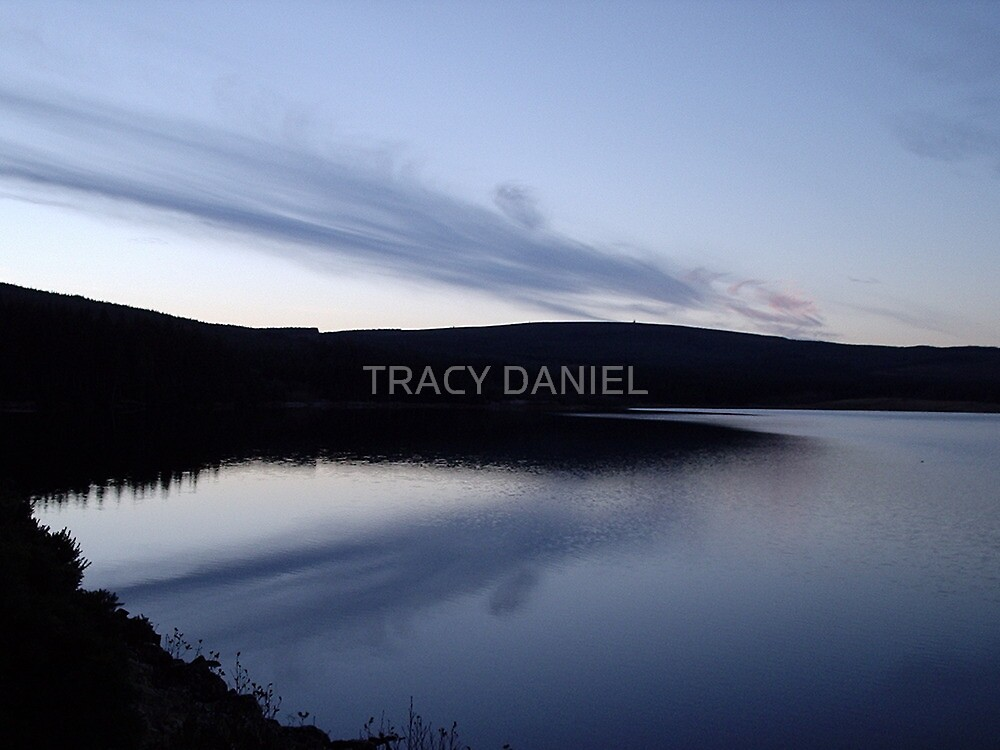 Evening Light by TRACY DANIEL
