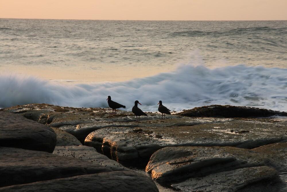 black birds by marine-lea