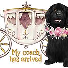 My Coach Has Arrived by Christine Mullis