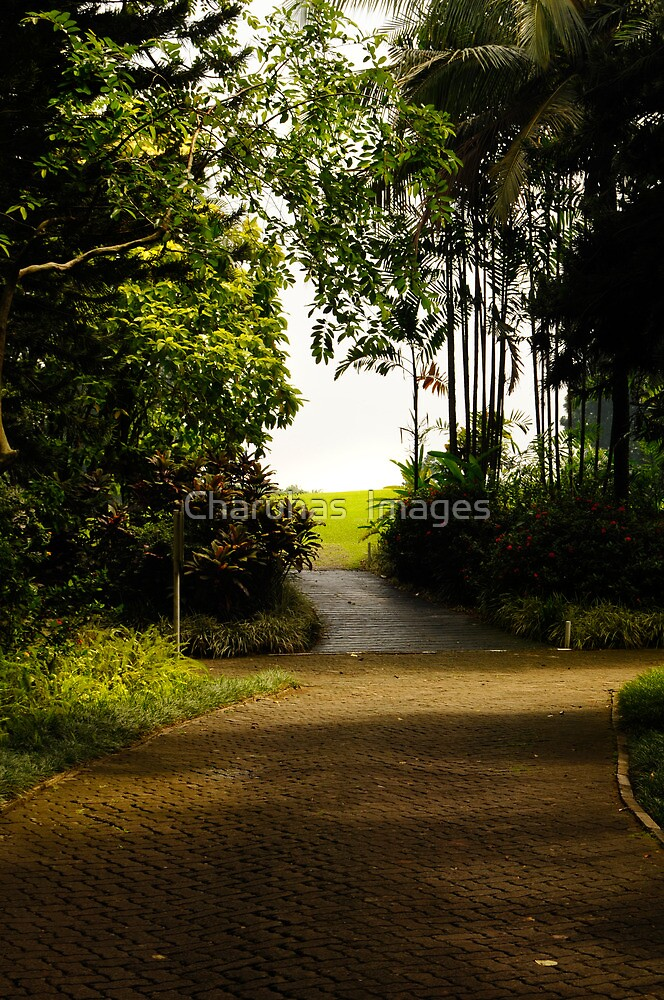 Path by Charuhas  Images
