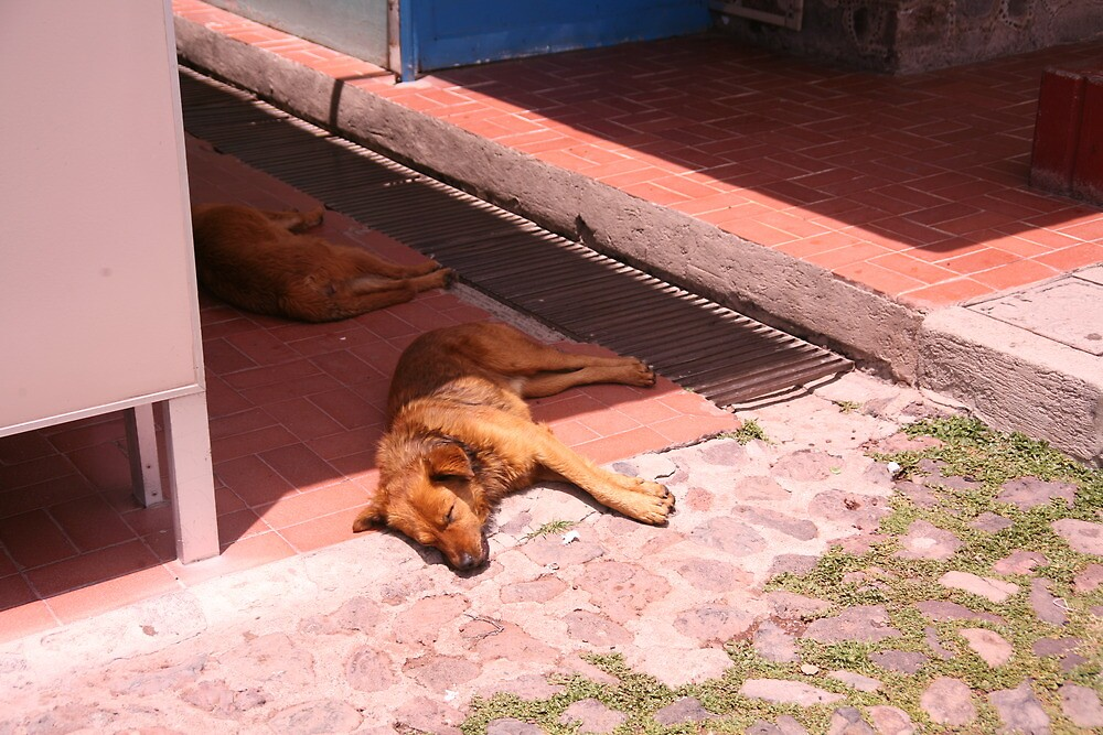 Let Sleeping Dogs Lie by katw0man