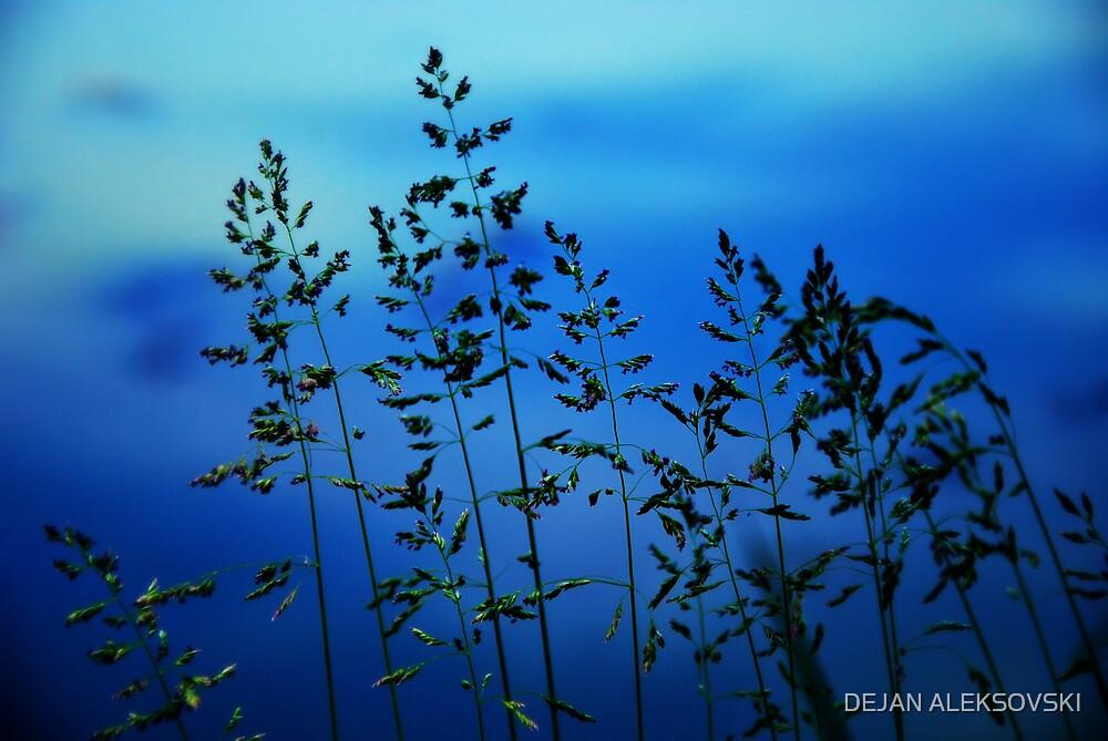 Grass by DEJAN ALEKSOVSKI