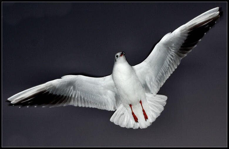 seagull by Heike Nagel