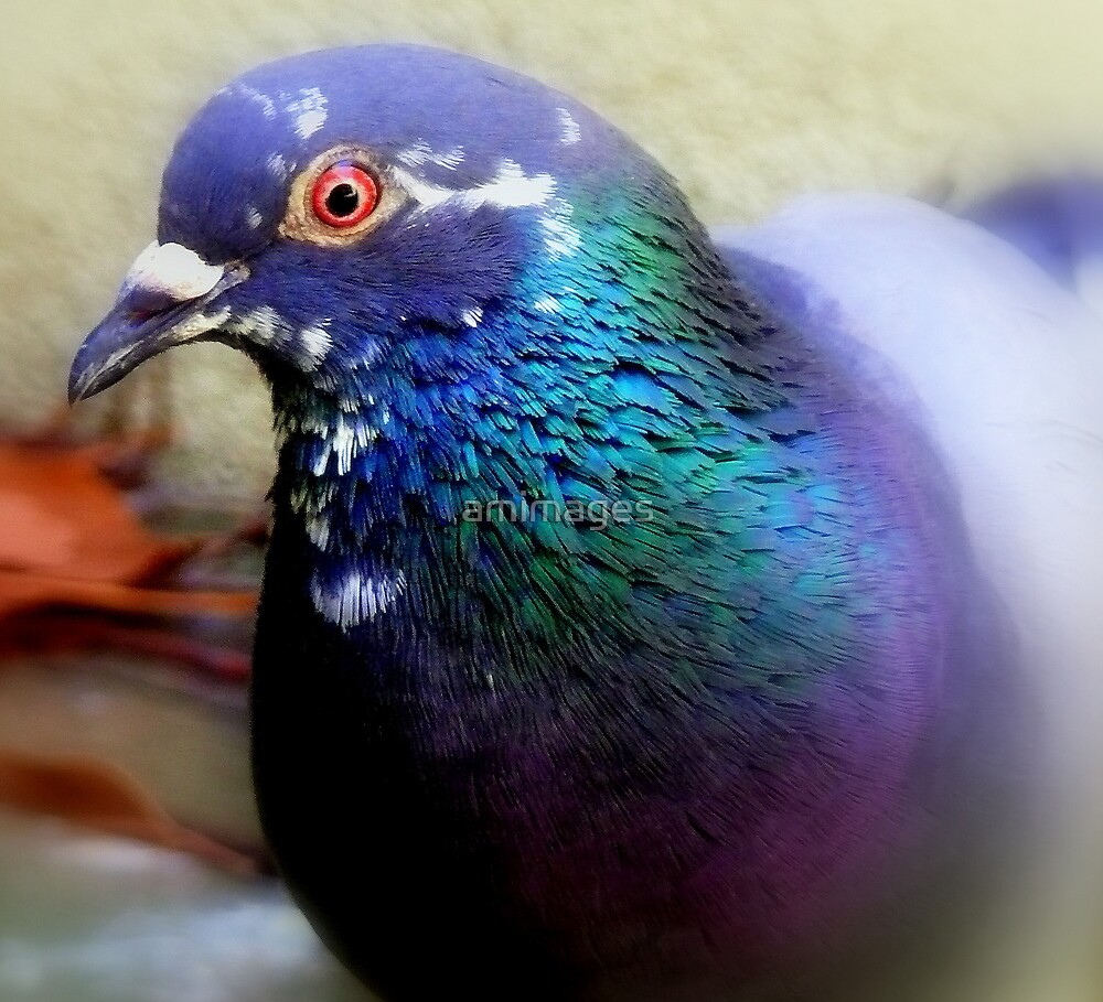 rainbow pigeon by amimages