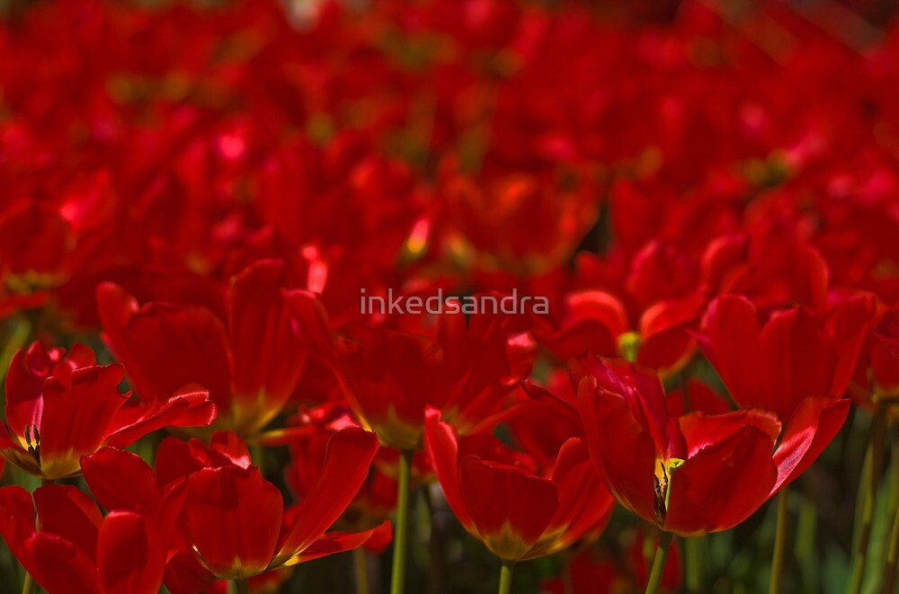 Simply Red by inkedsandra