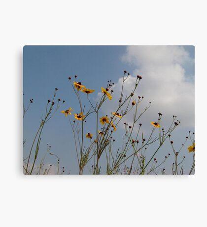 Wild Coreopsis Canvas Print