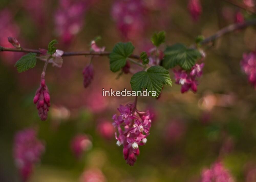 Flowering Currant by inkedsandra