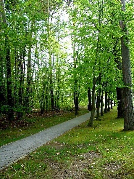 The chosen path by missminx