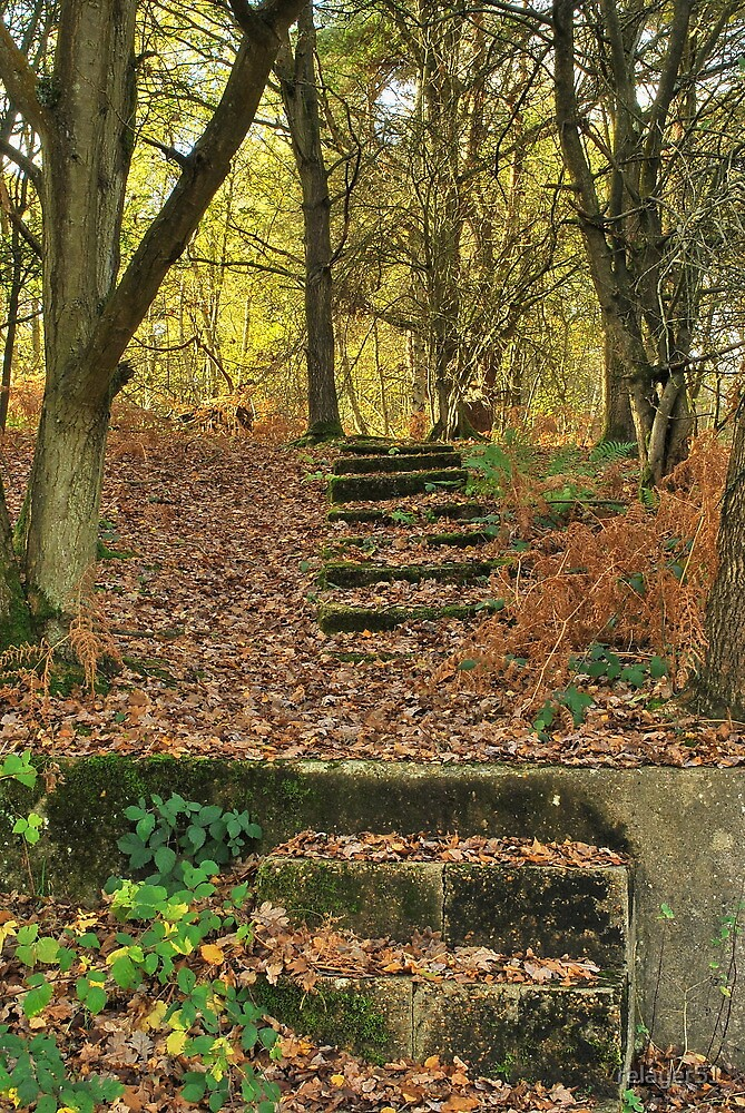 Forgotten steps by relayer51