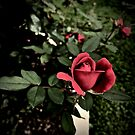 Rose Garden by justminting