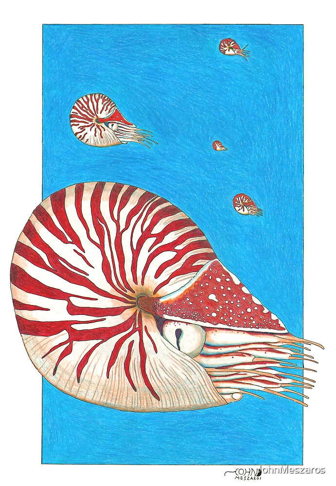 Chambered Nautilus by JohnMeszaros