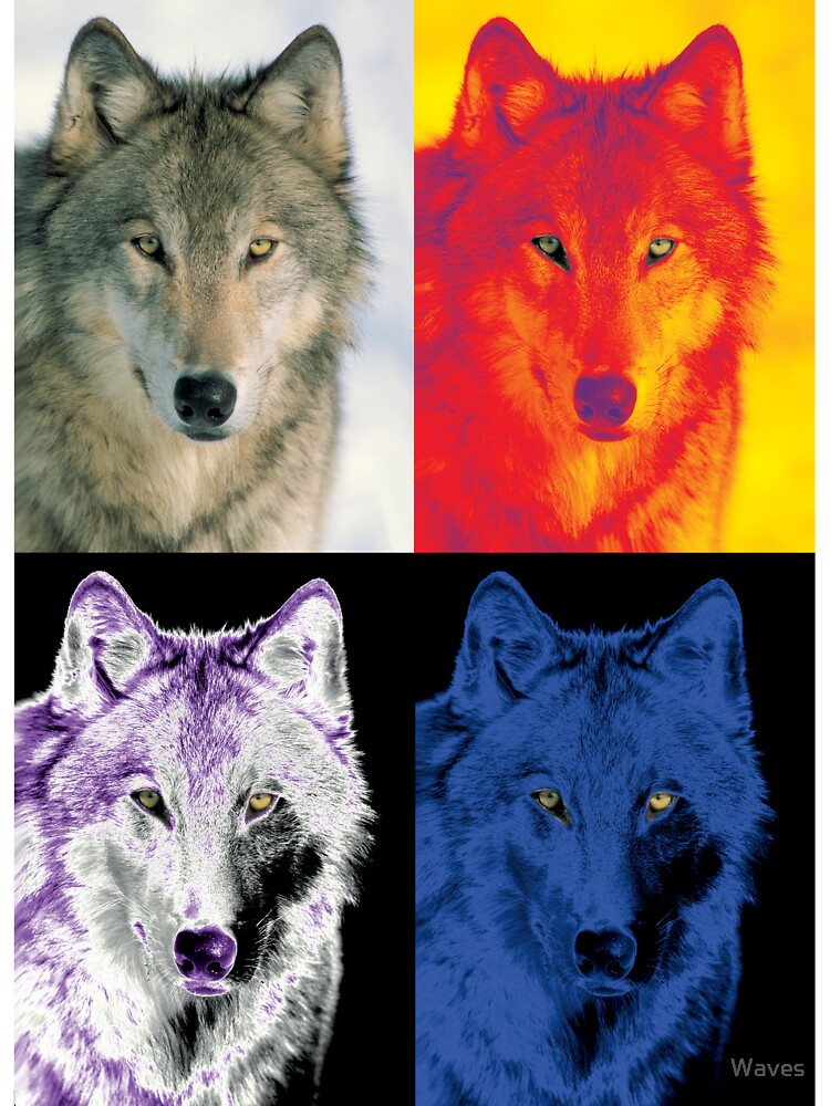 4 wolf faces by Waves