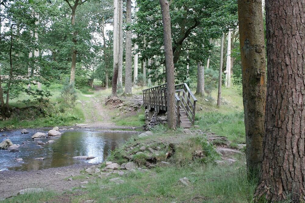 Eskdale Woods by biroballpoint