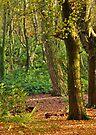 The woodland realm by inkedsandra