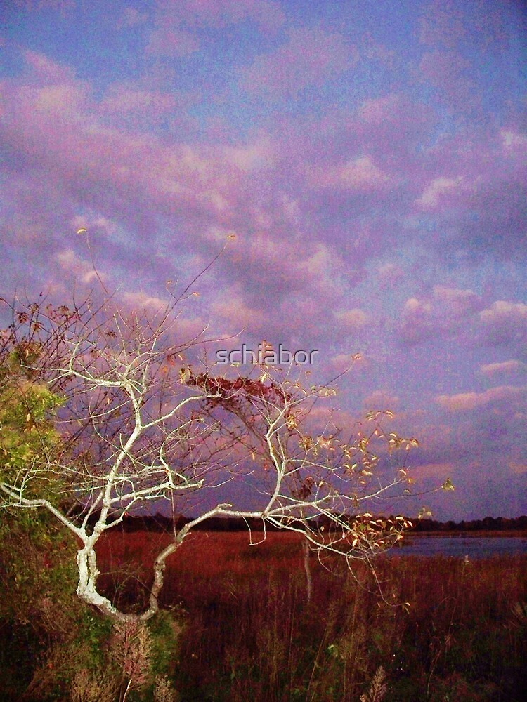 Tree and Sky at Cape May Point State Park  NJ by schiabor