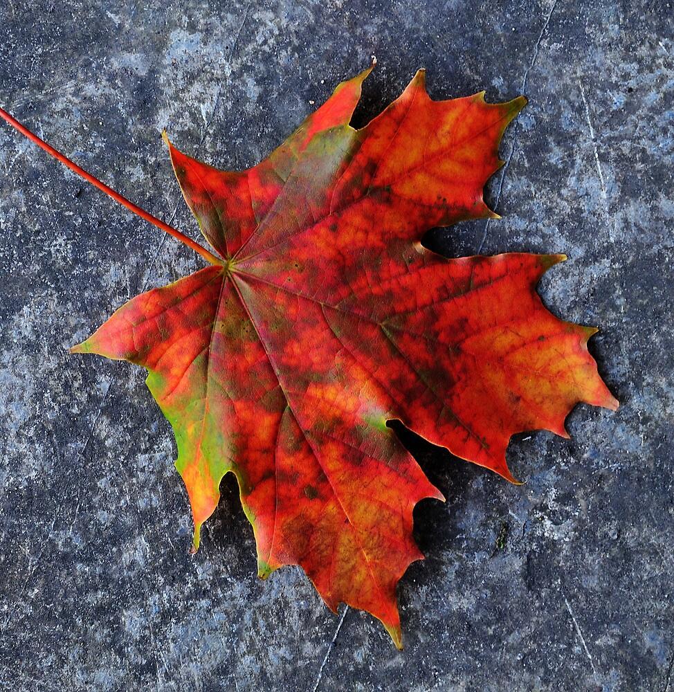 Autumn glory by Peter Mulligan