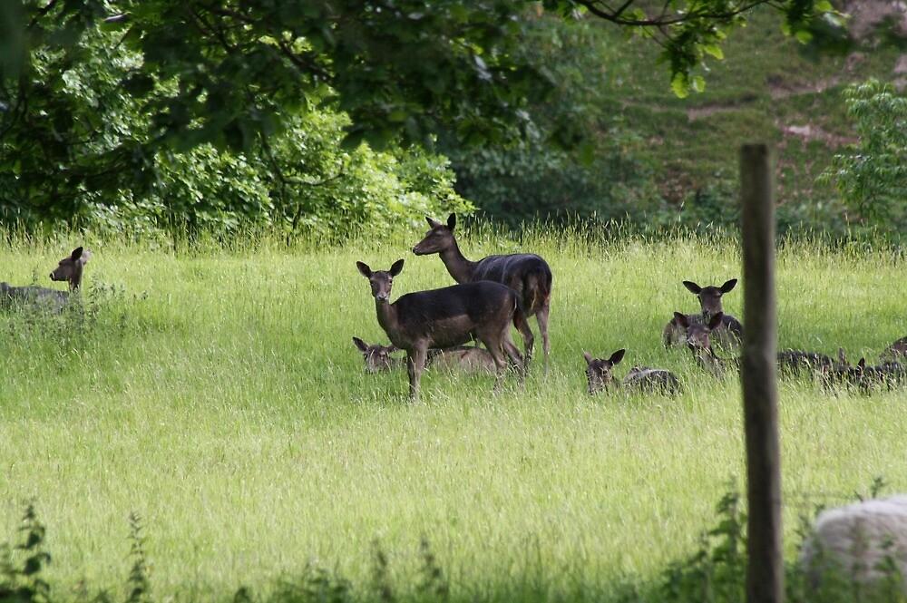 Deer in Levens Park by biroballpoint