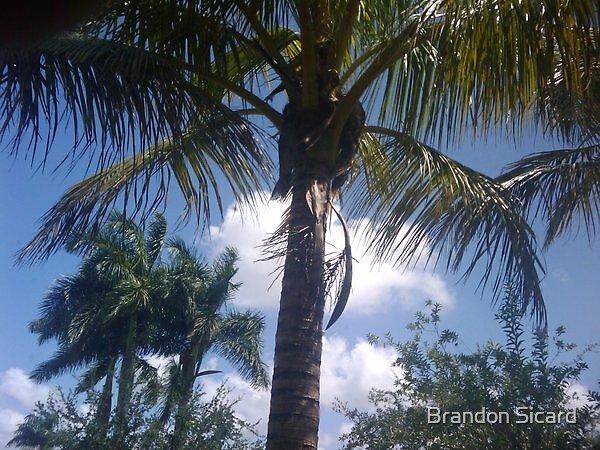 Under the Palm Tree. by Brandon Sicard