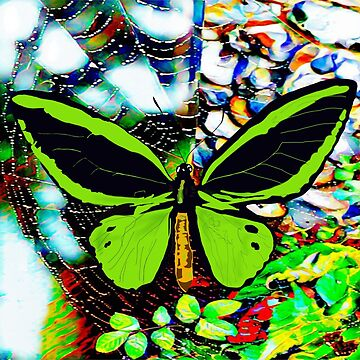 Butterfly on a Spider's Web (Fliss Cook) by TinaJostDesigns
