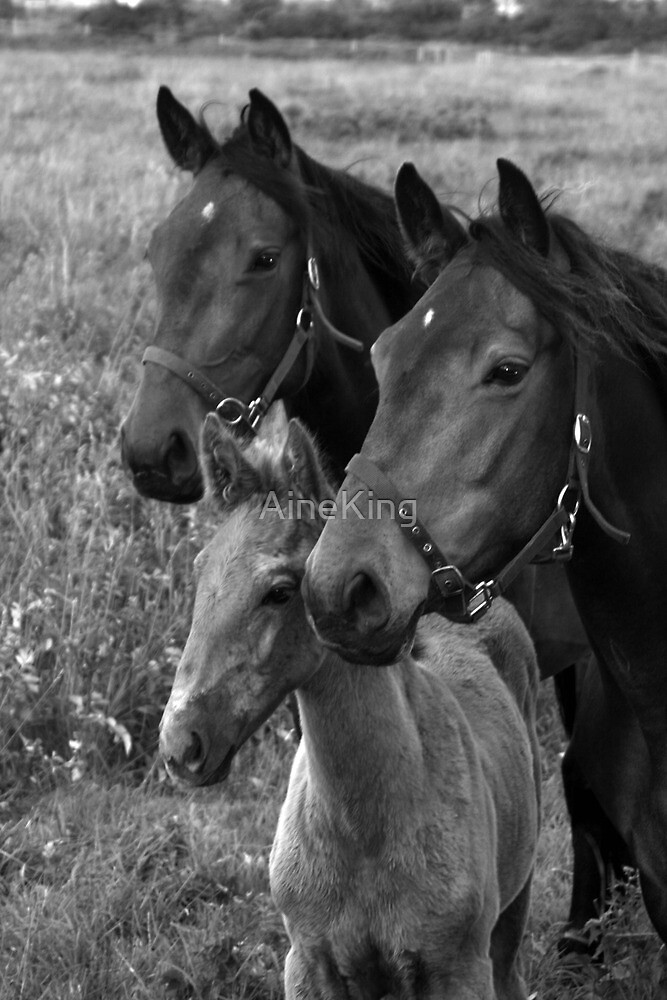 Family Portrait by Aine King