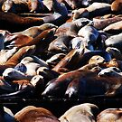 Band of Sea Lions by Benjamin Padgett