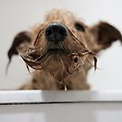 Dirty Dog! by Trish  Anderson