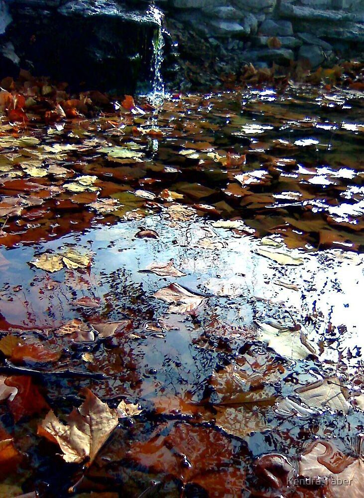 Floating leaves by Kendra Taber
