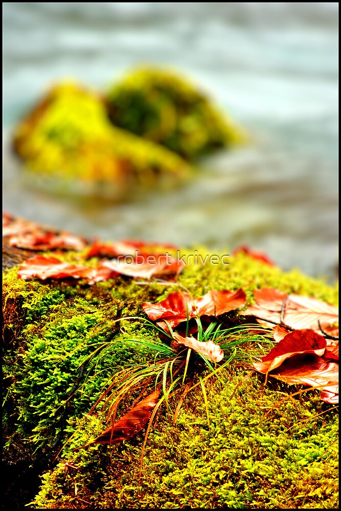 fall by robert krivec