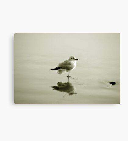 Bird reflection Canvas Print