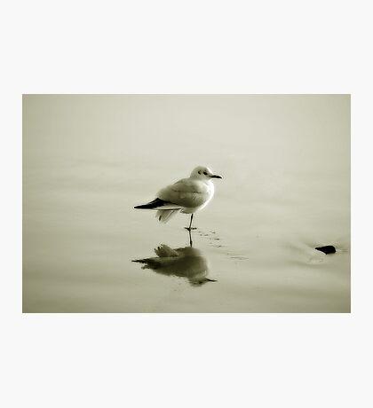 Bird reflection Photographic Print