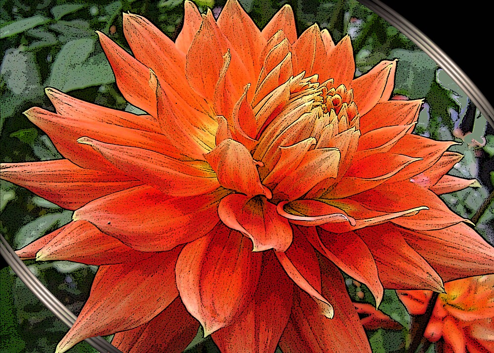 orange beauty by cardtricks
