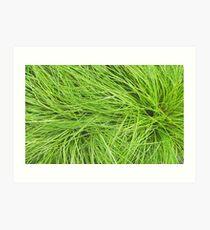 A Swirl of Grass III Art Print