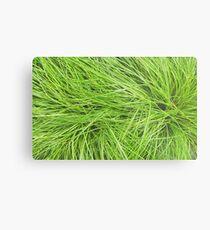 A Swirl of Grass III Metal Print