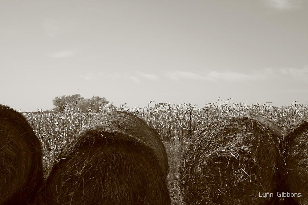 Farmers Field by Lynn  Gibbons