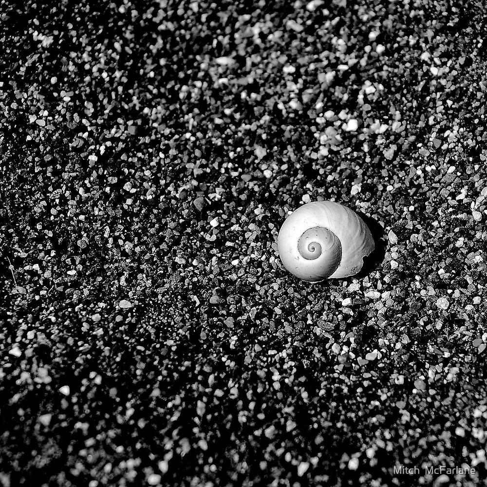 Sea shell on the seashore by Mitch  McFarlane