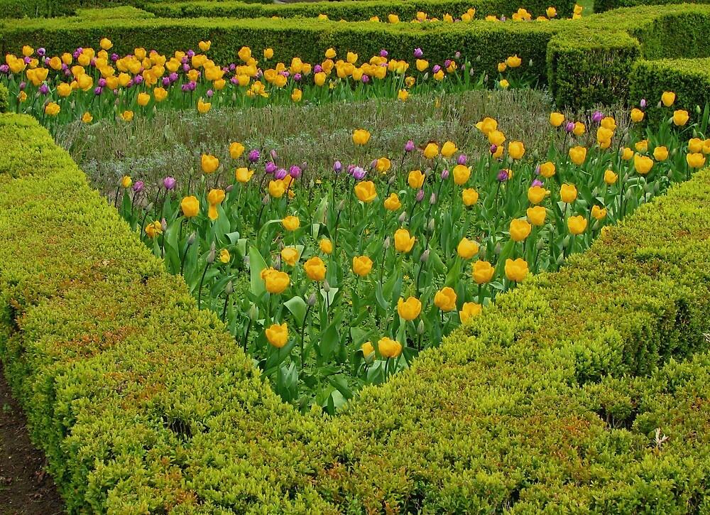 Tulip Corner by Caroline Anderson