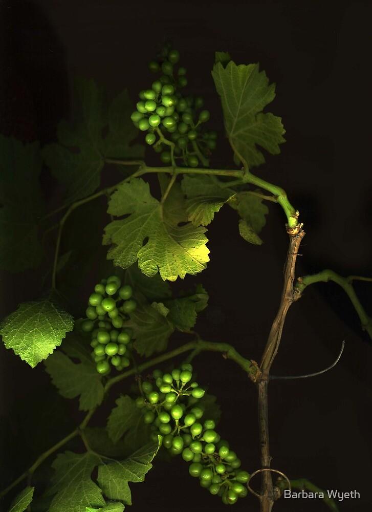 Wild Grape by Barbara Wyeth