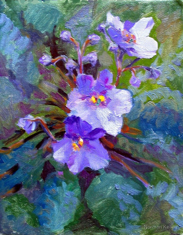 African Violets by Norman Kelley