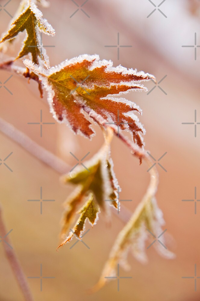 Frosty Autumn by Andrea Austin
