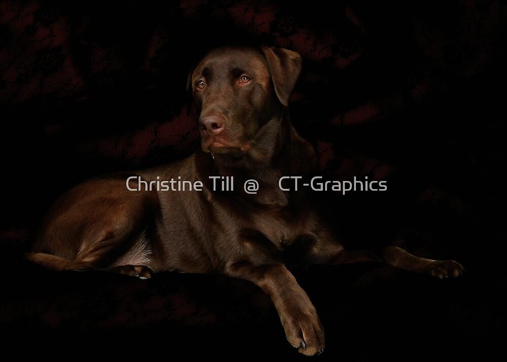 Labrador Retriever by Christine Till  @    CT-Graphics